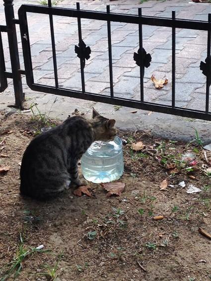 cat well