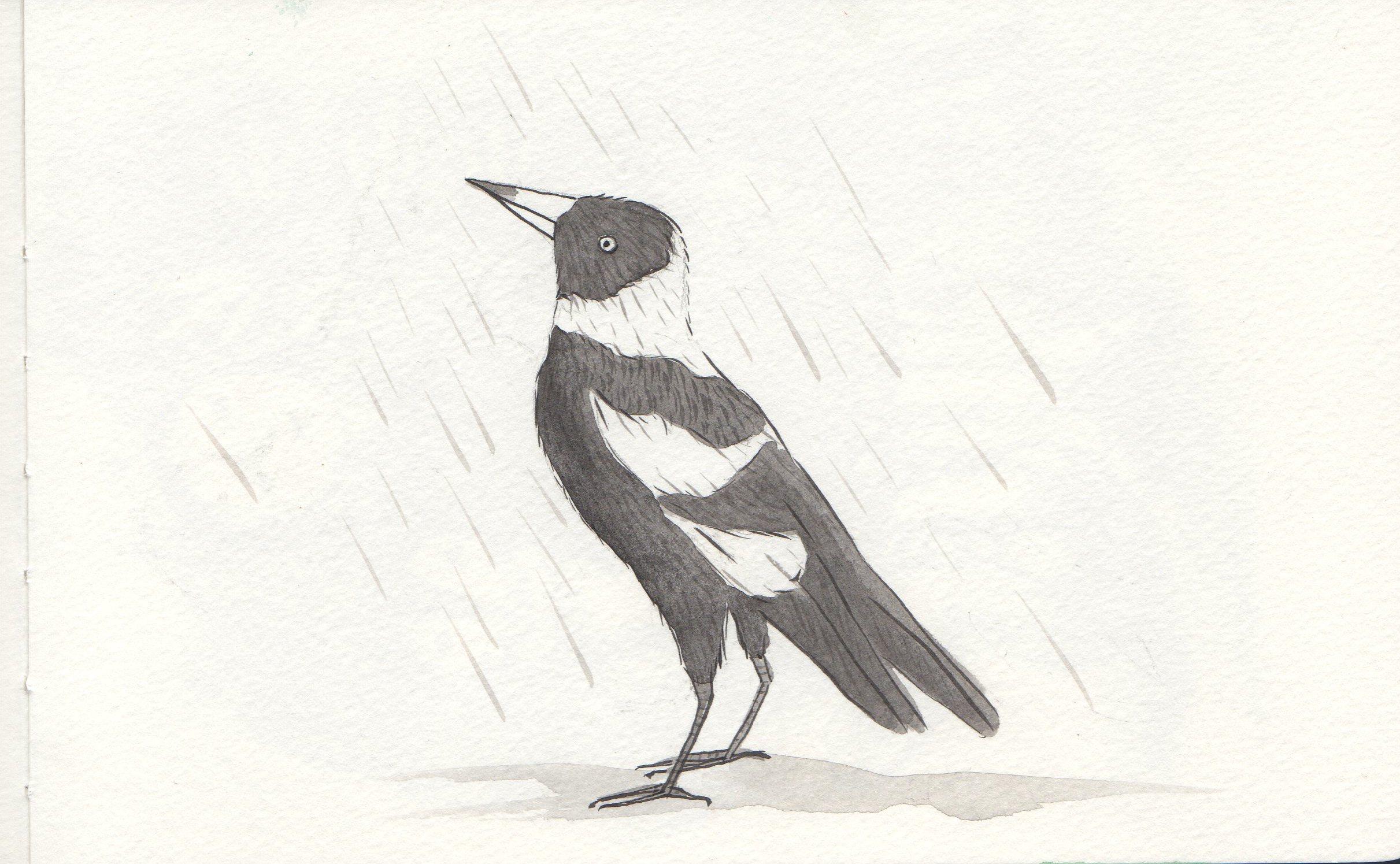 Varuna magpie